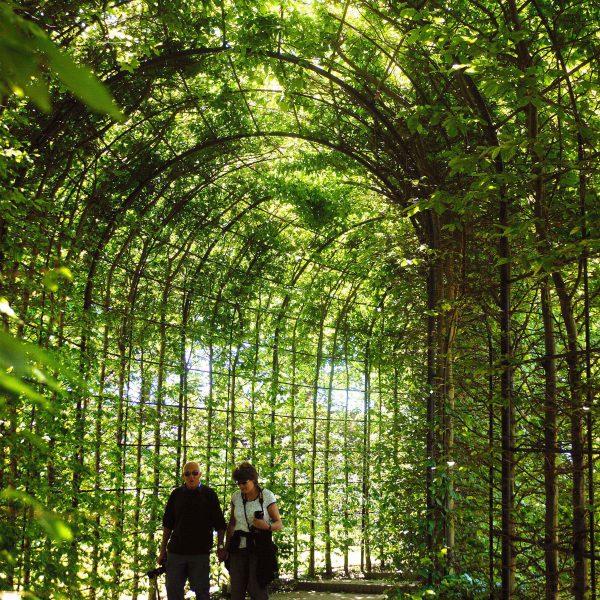 The Alnwick Garden Poison Garden The Alnwick Garden