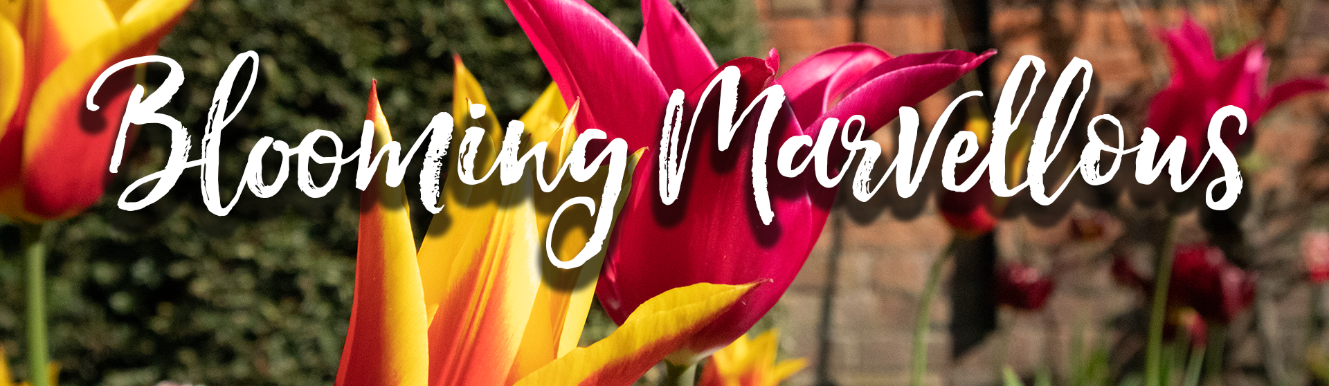 Blooming Marvellous Launch